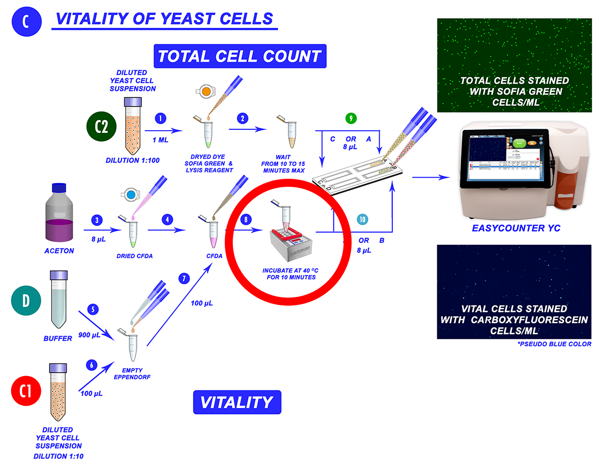 cell vitality determination