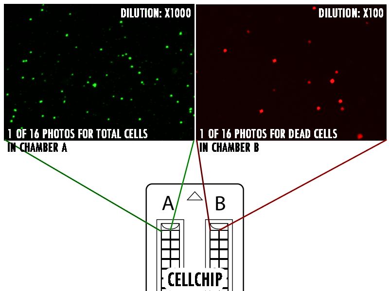 Counting in two chambers of the CELLCHIP